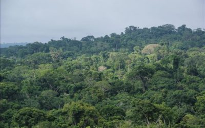 Burundi / Ecologie : La protection du Parc national de la Kibira ( Photo : Yvan Rukundo )