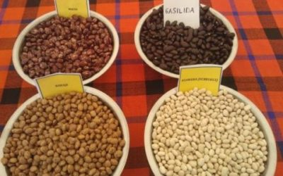 4 types de Haricots au Burundi ( Photo : ISABU 2016 )