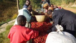 Sensibilisation contre le trafic illicite du café MADE IN BURUNDI vers le Rwanda ( Photo : fh-suisse.org )